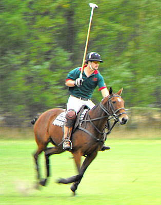 New Zealand polo ponies are renowned the world over for their speed and toughness.